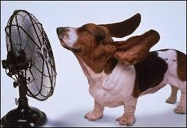 Resultado de imagen de foto perro calor