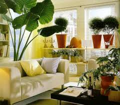 plants home decorations ideas for home decorating with indoor plants decorating with indoor pl
