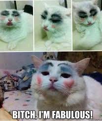 Funny Kitten Memes via Relatably.com