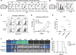 <b>Triple</b> gene ablation with the one-shot CRISPR system to generate ...