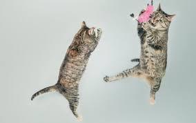 <b>Игрушка</b> для кошек <b>GiGwi Cat</b> Toys Мышка со звуковым чипом ...