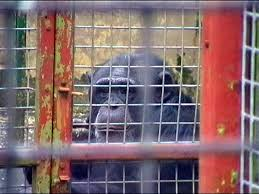 Animal Cruelty   Zoos Debate org how to write an admission essay zoo
