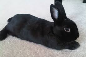 <b>Cute rabbit</b> survey uncovers most popular bunny face | Nottingham ...