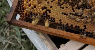Αποτέλεσμα εικόνας για βασιλικα κελια μελι ληθαιον