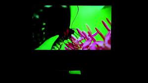 Обзор проекционных экранов <b>Lumien Master Picture</b> CSR - YouTube