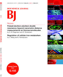 regulation of cellular iron metabolism biochemical journal