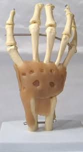 hot life size upper extremity model human arm joint