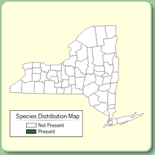 Ononis repens - Species Page - NYFA: New York Flora Atlas