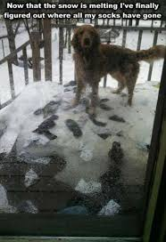 Snow is melting - dog meme | Funny Dirty Adult Jokes, Memes & Pictures via Relatably.com