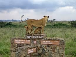 Photo of Nairobi National park 1