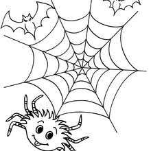 Small Picture Spider hanging from a thread coloring pages Hellokidscom