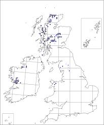 Dryas octopetala   Online Atlas of the British and Irish Flora