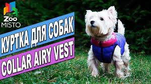 <b>Куртка для собак Collar</b> Airy Vest   Обзор куртки для собак   Collar ...
