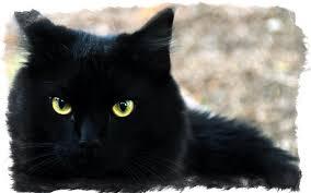 <b>Черный кот</b> в доме — приметы