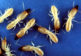 Image result for Pest Control Facts, Fiction and Insight Pest Control