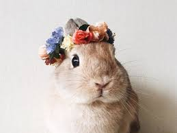 pets miniature flower crown hair accessories small animals rabbit accessoriesendearing lay small