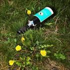 Images & Illustrations of bottle-grass