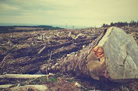 environmental degradation and impact of ecological destruction