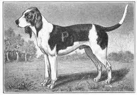 O σκύλος Artois...