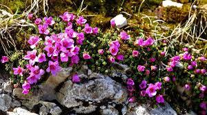 Oltre il mito del Baldo c'è una flora da scoprire