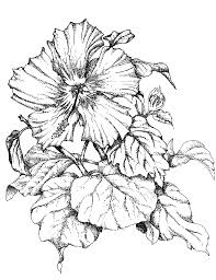admin e2 80 93 page 82 pencil art drawing flower pics home office designs art drawing office