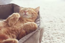 The 25 Best Heated <b>Cat Beds</b> of 2020 - Pet Life Today