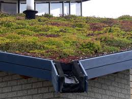green living roof guest post the benefits of living roofs for cities