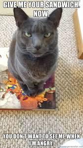 Seriously Mad Cat | Meme Generator via Relatably.com