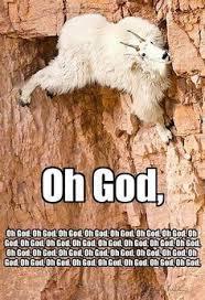 Giggle, giggle, giggle, snort on Pinterest | Miranda Lambert ... via Relatably.com