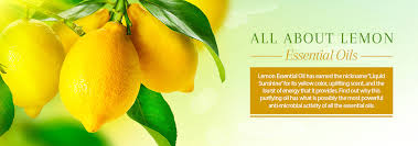 <b>Lemon</b> Oil - Uses & Benefits of Refreshing & Invigorating <b>Essential Oil</b>