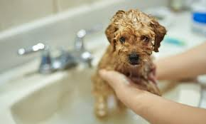 Pet Grooming 101: Maintaining a Healthy Coat for Your <b>Dog</b> ...