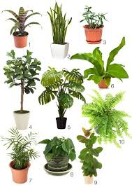 1000 images about indoor plants on pinterest low lights indoor and houseplant best low light office plants