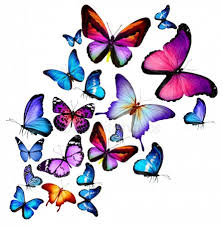 printio бабочки летают бабочки