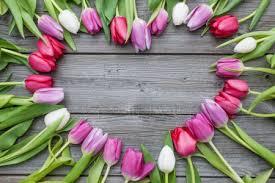 ᐈ <b>Красные тюльпаны</b> фото, фотографии красный тюльпан ...