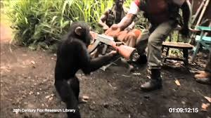 Ape With AK-47...The <b>Monkey Killer</b> ! - YouTube