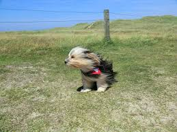 Image result for dog in wind