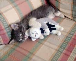 Картинки по запросу котенок тихо спит