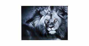 """<b>Картина</b> """"Царь зверей"""" (<b>Lion King</b> Lying), стекло   KARE Tallinn"""