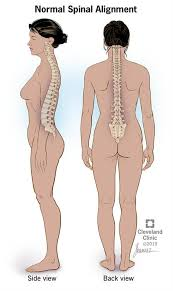 How to Improve <b>Posture</b> For a Healthy <b>Back</b>