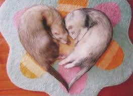 Image result for valentines day+cat