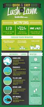 best ideas about lawn care business green lawn lawn care infographic
