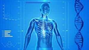 Resultado de imagen para human body