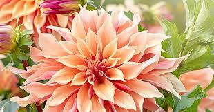 10 best <b>summer flowers</b>   Homes To Love