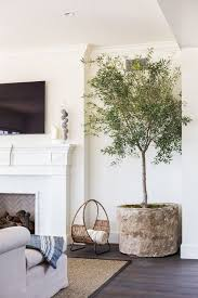 space living room olive: i love the idea of bringing an olive or fig tree into the space