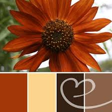 beautiful burnt orange mixed with brown for my delicious coffee and cream color for yunny creamer for my coffee imspired kitchen might throw in a dark red burnt red home office