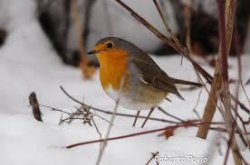 Risultati immagini per immagini della natura a febbraio