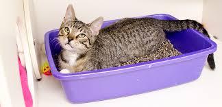 litter box problems cat litter box