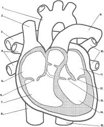 free secular homeschool resources for anatomy use this link on simple circuit diagram quiz