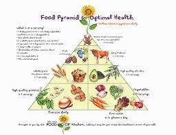 food pyramid essay persuasive essay words food pyramid essay