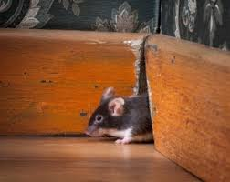 A mouse squeezing into a home